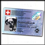 A real Swiss Dalmatian
